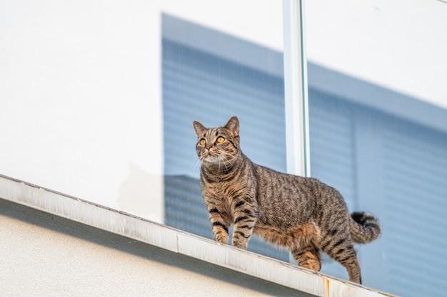 Katze an der weißen wand mit einem fenster an der oberfläche Kostenlose Fotos