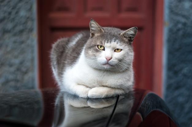 Katze auf dem motorhaubenauto entspannte sich Premium Fotos