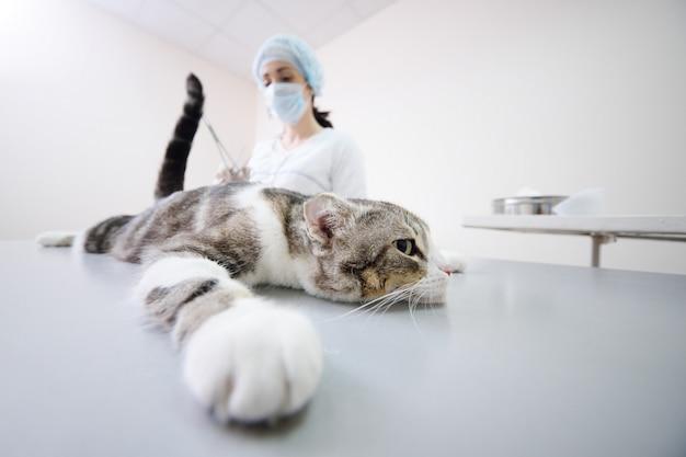 Katze auf dem operationstisch Premium Fotos
