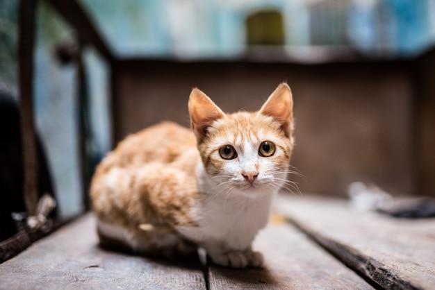 Katze auf der straße in einer schubkarre Premium Fotos