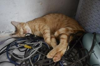 Katze auf einem kabel Kostenlose Fotos