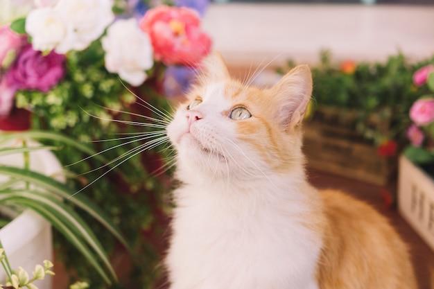 Katze auf terrasse mit pflanzen Kostenlose Fotos