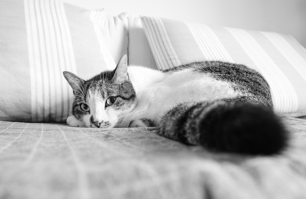 Katze, die auf dem sofa liegt und die kamera in schwarzweiss betrachtet Kostenlose Fotos