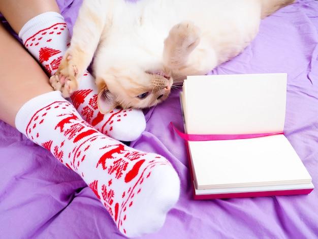 Katze, die auf sofa im wohnzimmer verziert für weihnachten, weibliche beine in den weihnachtssocken liegt. Premium Fotos