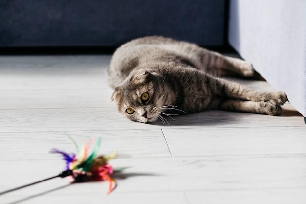 Katze, die mit spielzeug auf boden liegt Kostenlose Fotos