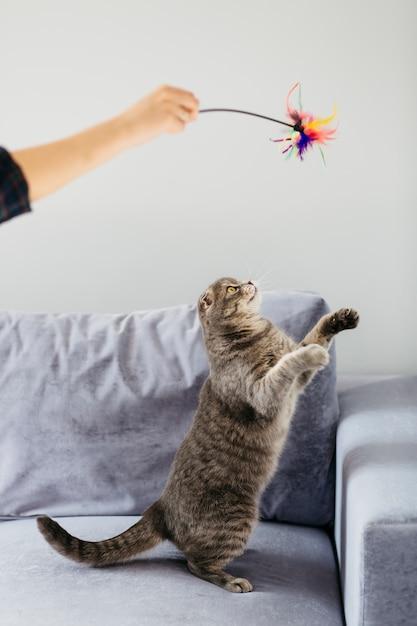 Katze, die spaß mit spielzeug auf sofa hat Kostenlose Fotos