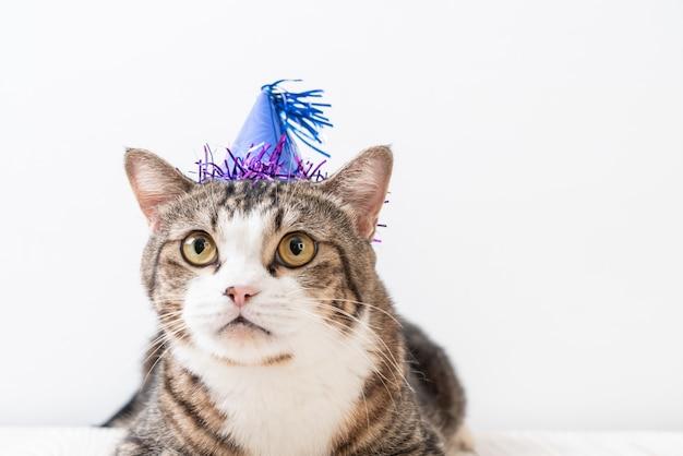 Katze mit partyhut Premium Fotos