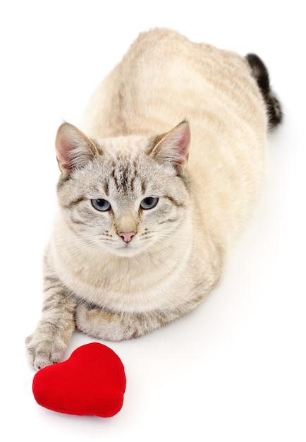 Katze mit rotem valentinstagherz auf weiß Premium Fotos