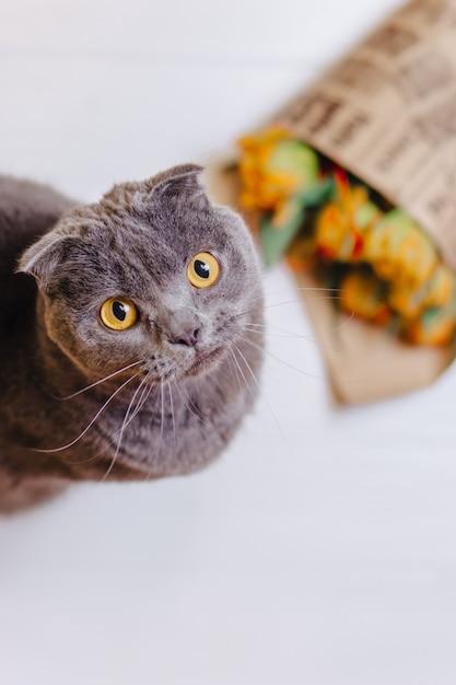 Katze schaut auf hintergrund sitzend auf blumen Premium Fotos