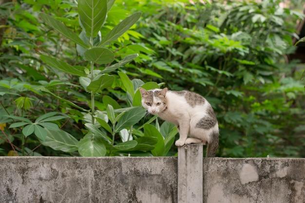 Katze setzen sich auf eine betonmauer Premium Fotos