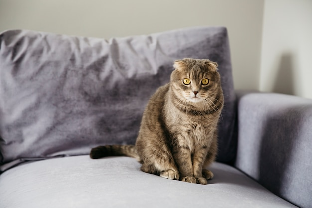 Katze sitzt auf dem sofa Kostenlose Fotos