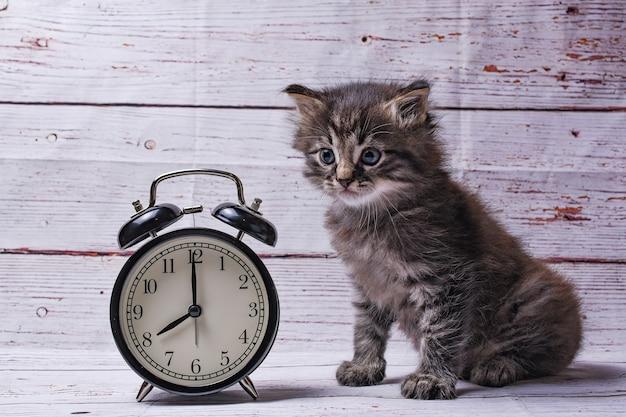 Katze und uhr Premium Fotos