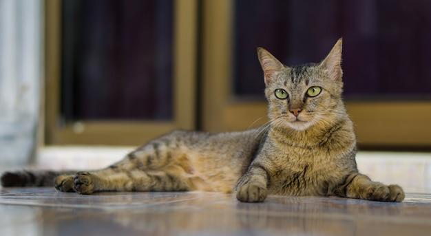 Katze Premium Fotos