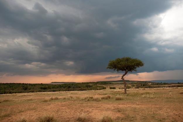 Kenia landschaft Premium Fotos
