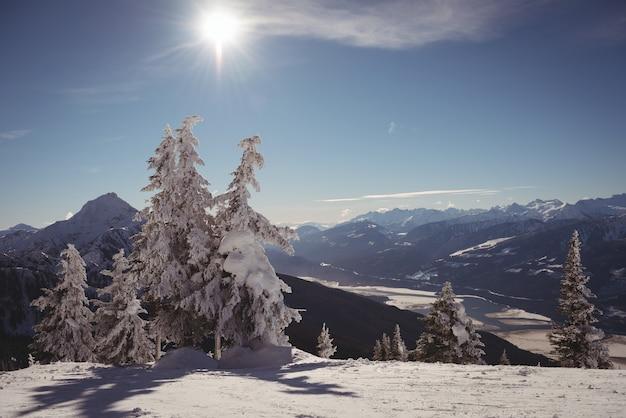 Kiefer mit schnee im winter bedeckt Kostenlose Fotos