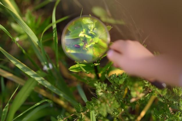 Kind, das natur mit lupe erforscht. kleiner junge, der käfer mit vergrößerungsglas betrachtet. nahansicht. Premium Fotos