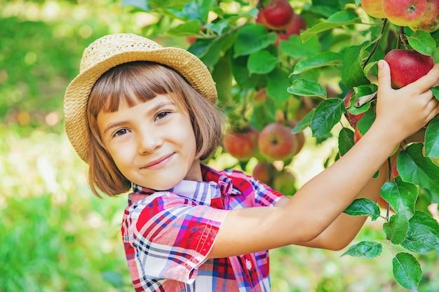 Kind pflückt äpfel im garten im garten Premium Fotos