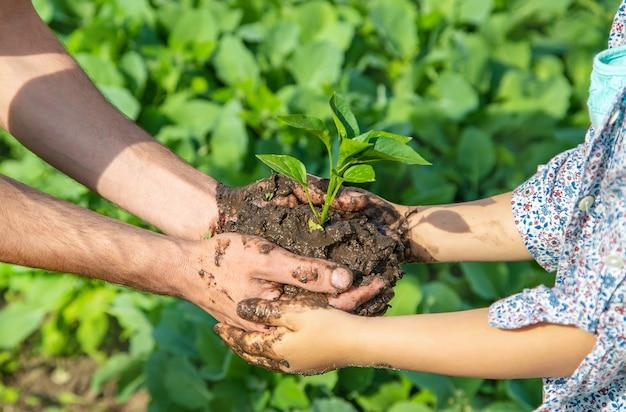 Kinder- und vaterpflanzen im garten. Premium Fotos