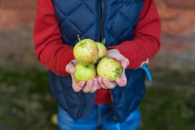 Kinderhände halten einen apfel. herbst. fallen. freiraum Premium Fotos