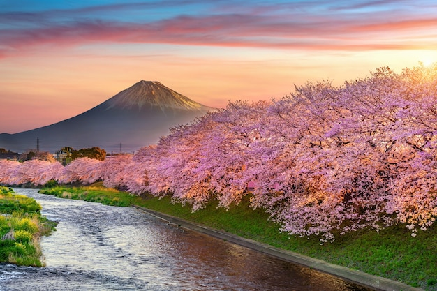 Kirschblüten und fuji-berg im frühjahr bei sonnenaufgang, shizuoka in japan. Kostenlose Fotos