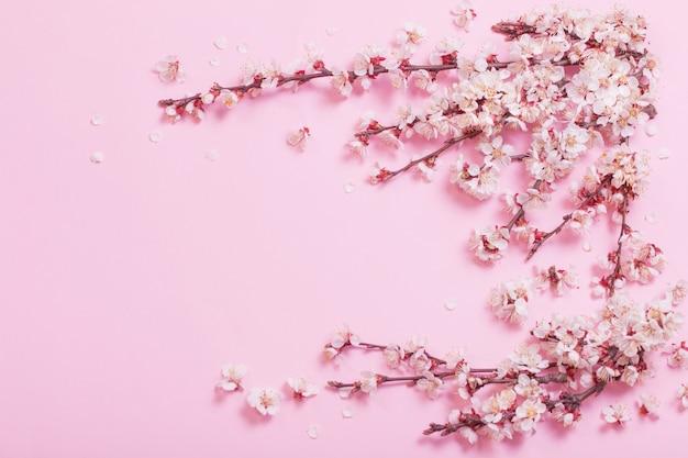 Kirschblumen auf rosa papierhintergrund Premium Fotos