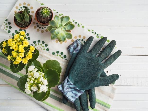Klare eingemachte saftige anlage mit paaren handschuhen auf serviette über der weißen tabelle Kostenlose Fotos