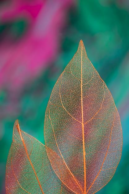 Klarer farbiger transparenter herbstlaub Kostenlose Fotos