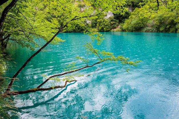 Klares wasser von plitvicer seen, kroatien Premium Fotos