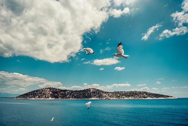 Kleine griechische insel mit den seemöwen, die in den himmel fliegen Premium Fotos