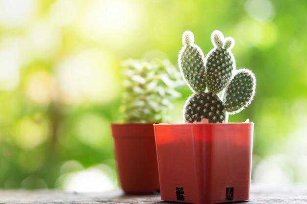 Kleine grüne kaktuspflanzentöpfe im garten Premium Fotos