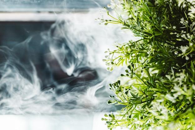 Kleine grünpflanze mit weißem rauche im hintergrund Premium Fotos