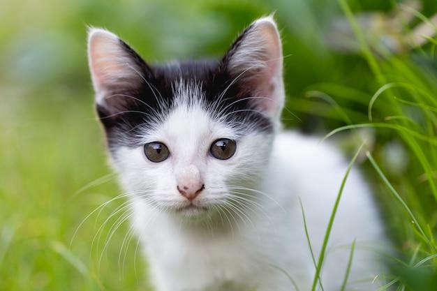 Kleine katze, die auf dem gras sitzt. Kostenlose Fotos