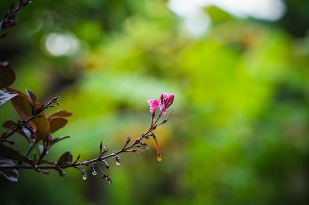 Kleine purpurrote blume im unschärfehintergrund, im zurückhaltenden und im raum für das setzen des textgebrauches Premium Fotos