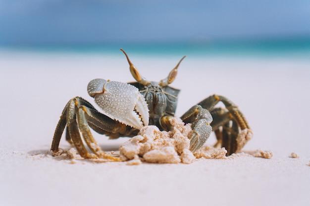 Kleine süße krabbe am strand am meer Kostenlose Fotos
