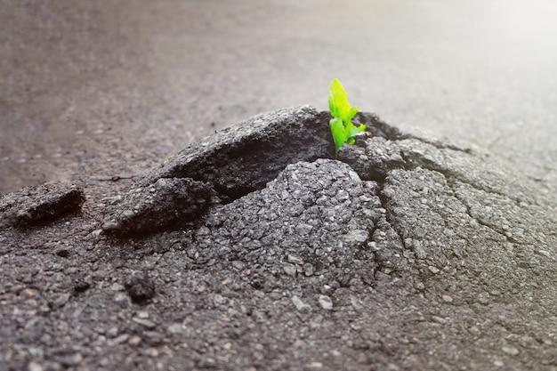 Kleine und grüne pflanze wächst durch städtischen asphaltboden. grüne pflanze, die vom riss im asphalt auf straße wächst. platz für text oder design. Premium Fotos