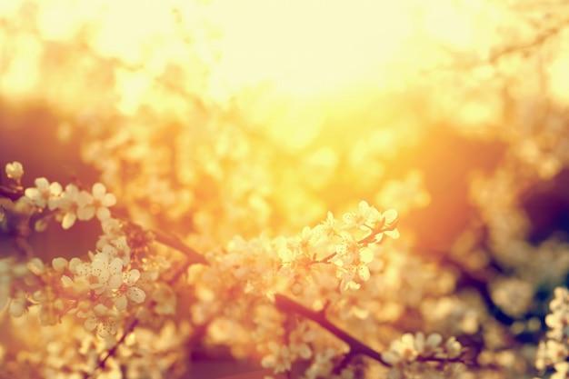 Kleine weiße Blumen sonnenbeschienenen   Download der kostenlosen Fotos