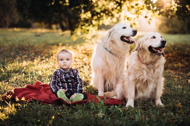 Kleiner junge und zwei golden retriever in einem schönen herbstpark Premium Fotos