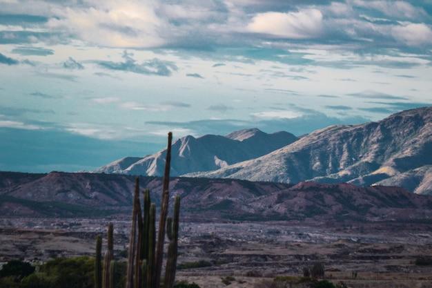 Kleiner kakteenstrauch in der tatacoa-wüste, kolumbien an einem düsteren tag Kostenlose Fotos