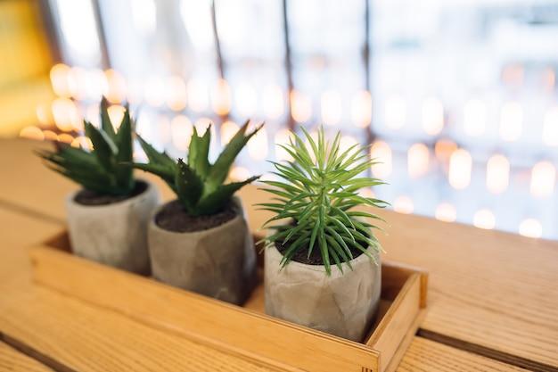 Kleiner kaktus und aloe in kleinen töpfen Kostenlose Fotos