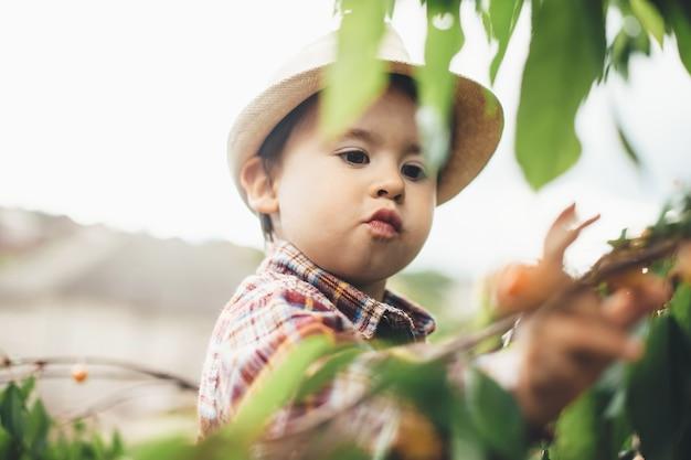 Kleiner kaukasischer junge, der kirschen an einem sonnigen tag beim klettern auf baum mit grünen blättern isst Premium Fotos