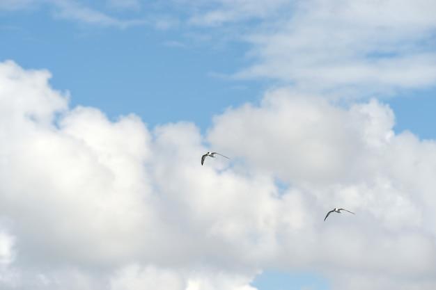 Kleiner vogel am himmel Premium Fotos