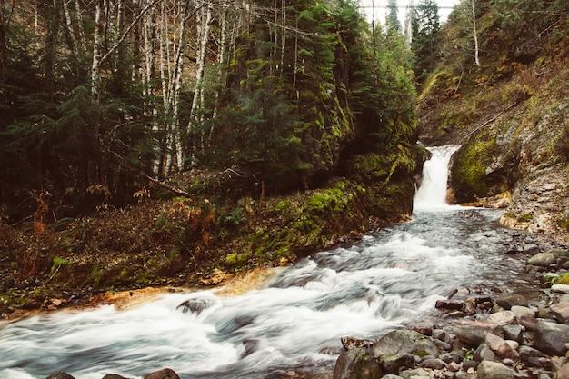 Kleiner wasserfall und ein fluss mit nassen steinen Kostenlose Fotos