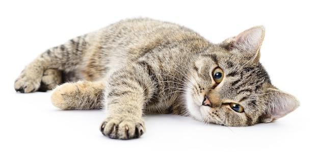 Kleines graues kätzchen auf einem weißen hintergrund Premium Fotos