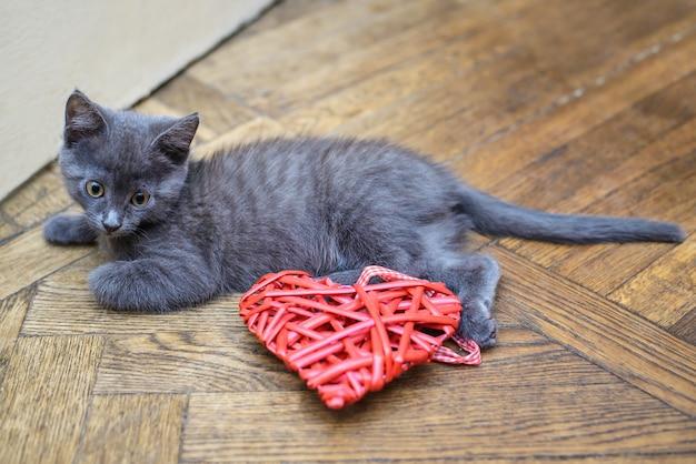 Kleines graues kätzchen, das auf dem boden nahe bei einem dekorativen herzen liegt Premium Fotos