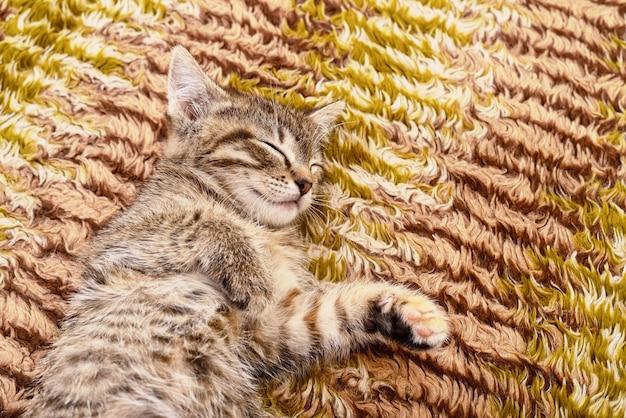 Kleines graues kätzchen, das auf textil dargestellt Premium Fotos