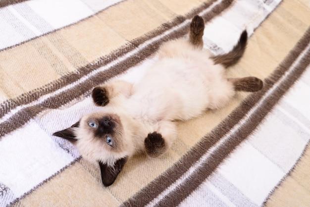 Kleines graues kätzchen, das auf textilhintergrund darstellte Premium Fotos