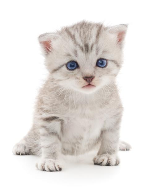 Kleines graues kätzchen lokalisiert auf weißem hintergrund Premium Fotos