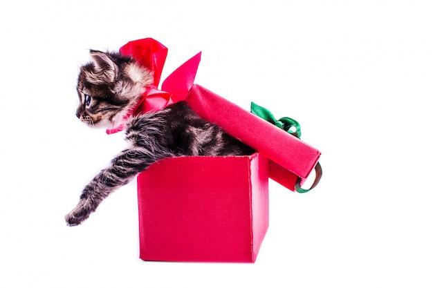 Kleines kätzchen der getigerten katze in einer roten geschenkbox mit einem bogen Premium Fotos