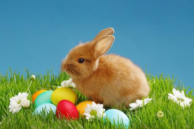 Kleines kaninchen und ostereier im grünen gras mit blauem himmel. ostern-feiertagskonzept. Premium Fotos