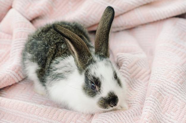 Kleines kaninchenbaby Premium Fotos